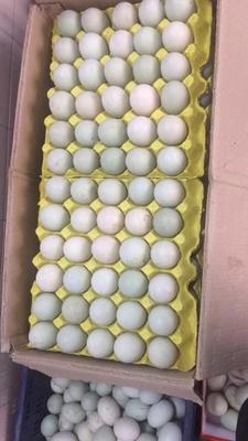 广西壮族自治区钦州市灵山县海鸭蛋 食用 箱装