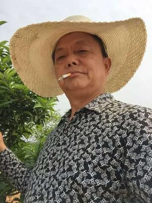 湖北省咸宁市咸安区油茶籽