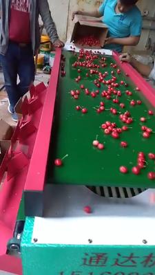 北京朝阳区樱桃分选机