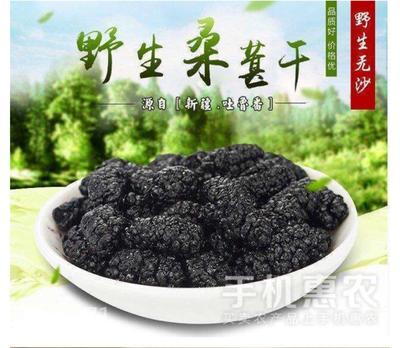 青海省西宁市城东区黑珍珠桑葚 1 - 2cm