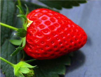 云南省曲靖市会泽县圣安德瑞斯草莓 20克以下