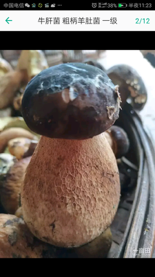 陕西省安康市汉滨区黑牛肝菌 1.0% 一级