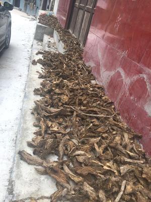 重庆城口县葛根干 散装 24个月以上
