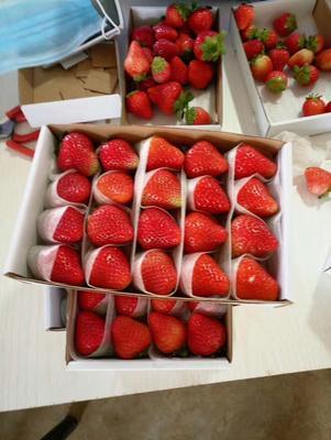 河北省邯郸市丛台区圣安德瑞斯草莓 20克以上