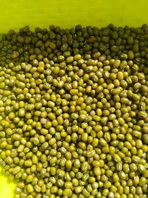 云南省昆明市呈贡区进口绿豆 袋装 1等品