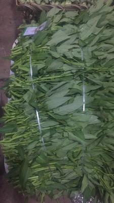 重庆江津区水上空心菜 20 ~ 25cm