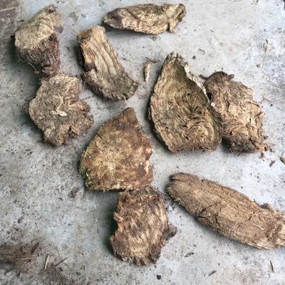 重庆城口县野生葛根 0.5-1.0斤