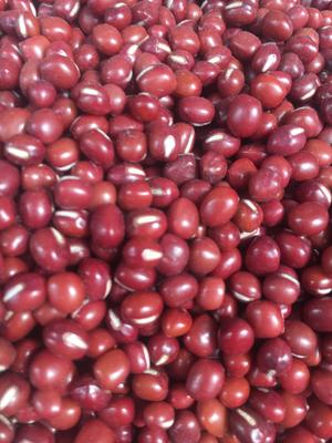 陕西省西安市新城区红小豆 纯粮率≥98% 袋装