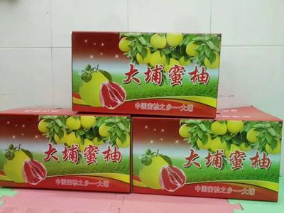 广东省梅州市大埔县红心柚 2.5斤以上