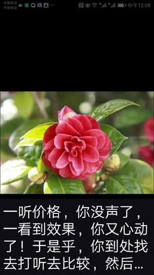 黑龙江省七台河市勃利县观赏牡丹 2cm以下 4cm以下 0.5米以下