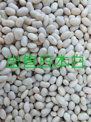 内蒙古自治区呼伦贝尔市鄂伦春自治旗白芸豆