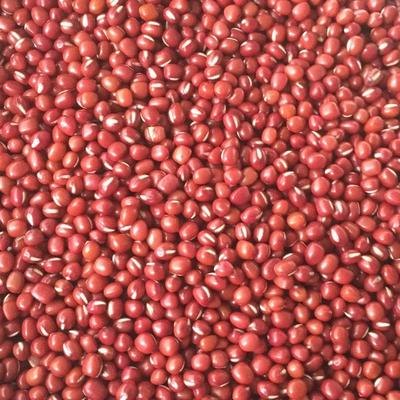 湖南省长沙市雨花区红小豆 纯粮率≥98% 袋装