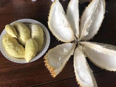 金枕头榴莲 80 - 90%以上 2公斤以下