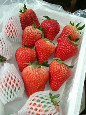 河北省廊坊市三河市红颜草莓 20克以上