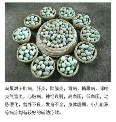山东省济宁市任城区桂花雀蛋 食用 散装