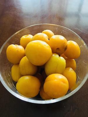 新疆维吾尔自治区乌鲁木齐市水磨沟区小白杏 40-45mm