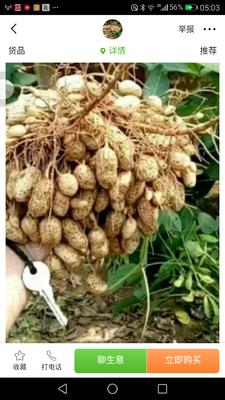 湖北省十堰市郧阳区花生种子