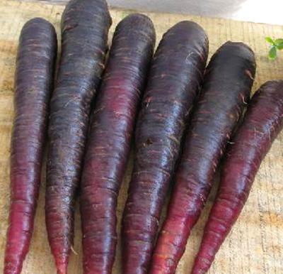 内蒙古自治区赤峰市翁牛特旗黑胡萝卜 15cm以上 3两以上 3cm以下