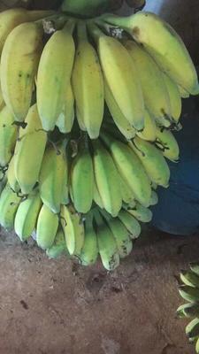 这是一张关于粉蕉 七成熟 40 - 50斤的产品图片