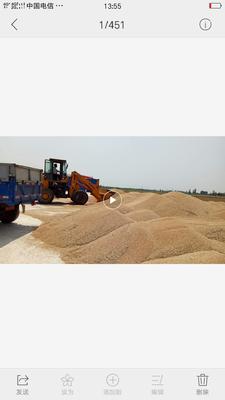 河北省沧州市沧县小麦种子