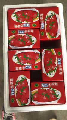 辽宁省丹东市东港市九九草莓 20克以下