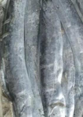 广东省湛江市霞山区南美带鱼 野生 1-1.5公斤