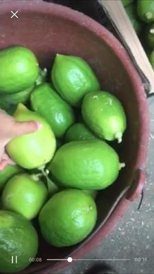 广西壮族自治区梧州市藤县台湾香水柠檬 2.7 - 3.2两