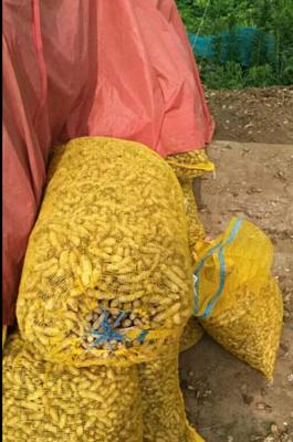 江苏省徐州市贾汪区四粒红花生 鲜货 带壳花生