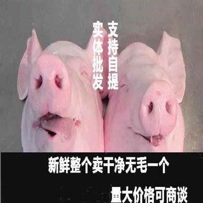 江西省新余市渝水区猪头肉 生肉
