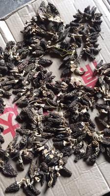 四川省成都市都江堰市干羊肚菌 散装 1年以上