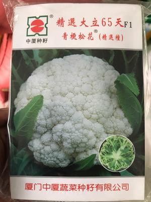 山东省济南市历城区松花菜种子 一级良种