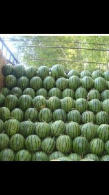 这是一张关于心甜心美西瓜 有籽 1茬 9成熟 10斤打底的产品图片