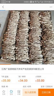 江西省抚州市临川区广昌3号茶树菇 6~8cm