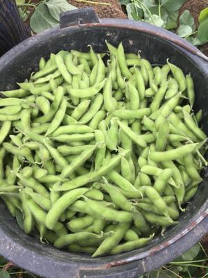 这是一张关于日本青毛豆 18~24克的产品图片