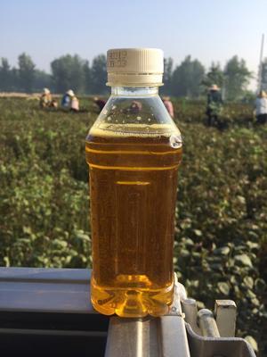 这是一张关于紫苏油 的产品图片