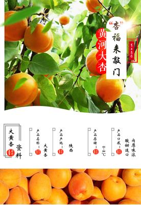 陕西省渭南市临渭区金太阳杏 30-40mm
