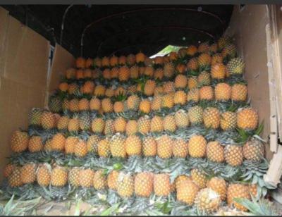 云南省西双版纳傣族自治州勐腊县泰国小菠萝 1.5 - 2斤