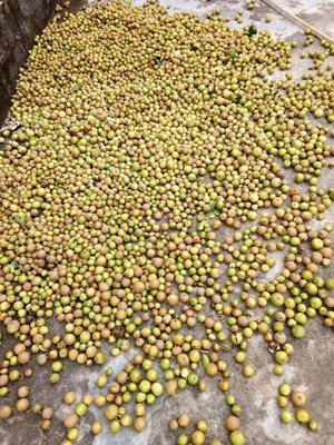 安徽省宣城市绩溪县油茶籽
