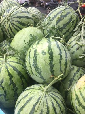 这是一张关于8424西瓜 有籽 2茬 8成熟 6斤打底的产品图片