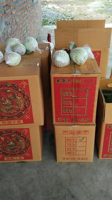 广东省云浮市新兴县珍珠番石榴 200-250克