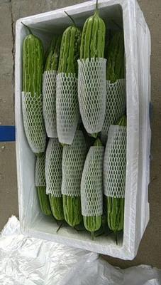 这是一张关于绿苦瓜 22-25cm 8两以上的产品图片