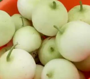 广西壮族自治区桂林市全州县枧塘香瓜 0.3斤以上