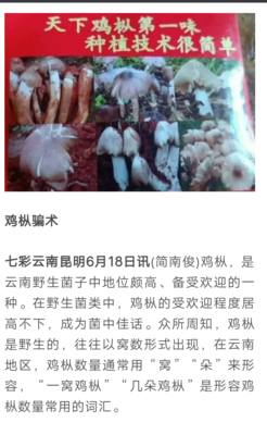 云南省红河哈尼族彝族自治州开远市鸡枞菌菌种
