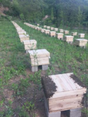 甘肃省陇南市两当县土蜂蜜 桶装 100% 2年以上