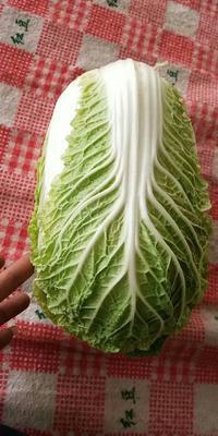 贵州省贵阳市南明区青麻叶大白菜 2~3斤 净菜