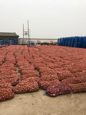 这是一张关于邳州大蒜 6.0-6.5cm 多瓣蒜的产品图片