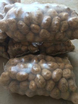 陕西省渭南市华县克新土豆 2两以上