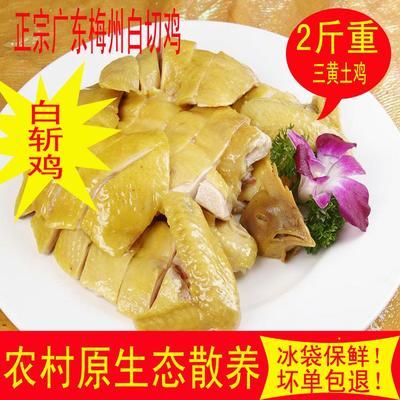 广东省深圳市龙岗区白切鸡 简加工
