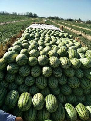 新疆维吾尔自治区昌吉回族自治州昌吉市安农二号西瓜 有籽 1茬 8成熟 10斤打底