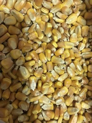吉林省松原市乾安县玉米干粮 霉变≤2% 净货
